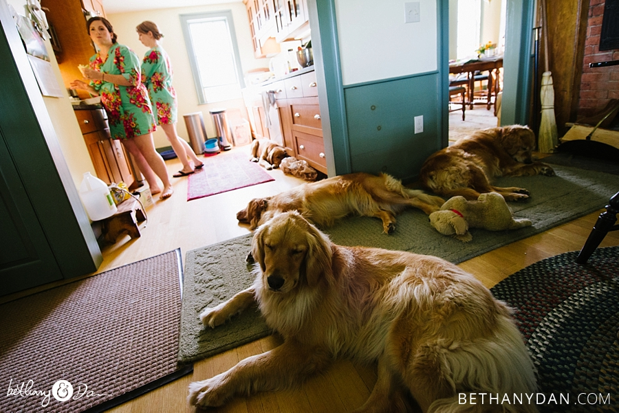 All the dogs lounging before the ceremony