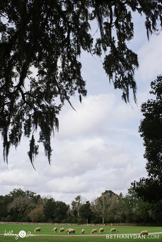 Charleston Dec 2015 0081